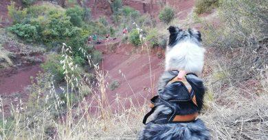 Vivez l'aventure Trail avec votre meilleur compagnon